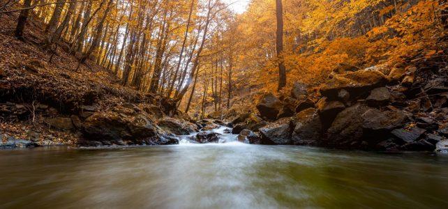 Zona Pestis – Padurea Neagra